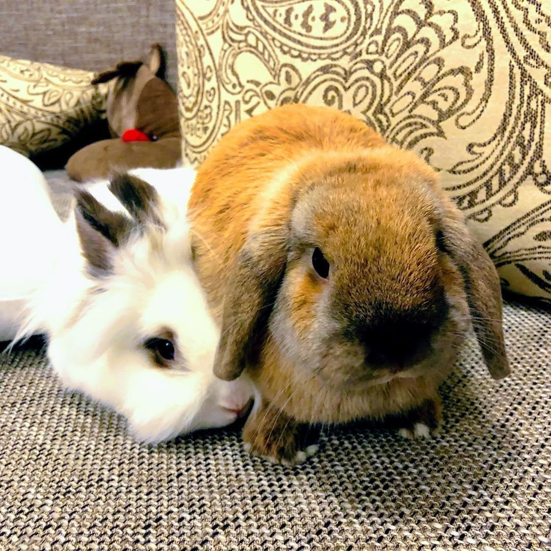 A picture of two bunnies