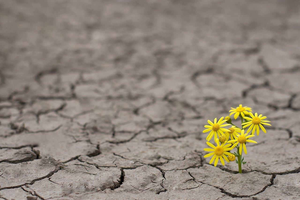Construindo softwares resilientes