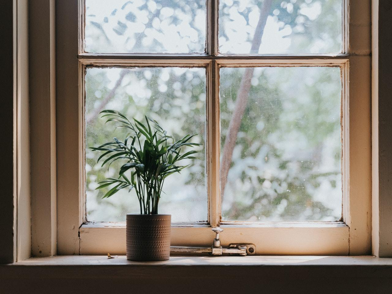 "A good example of an Alt Attribute - ""A single potted plant on a windowsill"""